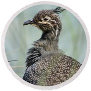 Crested Tinamou Round Beach Towel