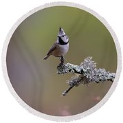 Crested Tit In Woodland Round Beach Towel