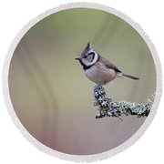 Crested Tit Lichen Round Beach Towel