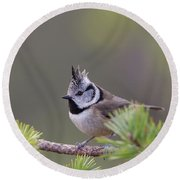 Crested Tit Pine Round Beach Towel