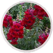 Crimson Snapdragons Round Beach Towel