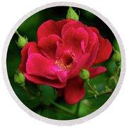 Crimson Red Rose By Kaye Menner Round Beach Towel