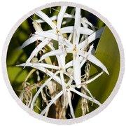Crinum Spiderlily Flower Round Beach Towel