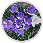 Crocus 6675 Round Beach Towel