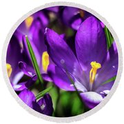 Crocus Amongst Us Round Beach Towel