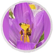Crocus And The Bee Round Beach Towel