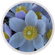 Crocus Blossoms Round Beach Towel