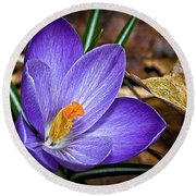 Crocus Emerging Round Beach Towel