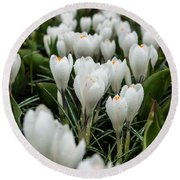 Crocuses 5 Round Beach Towel