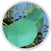 Crossing The Lily Pond Outback Nubmer Two Square Round Beach Towel