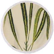 Croton Variegatum Angustifolium Round Beach Towel
