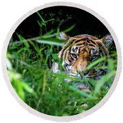 Crouching Tiger Hidden Cameraman Round Beach Towel