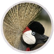 Crown Crane Close Up Round Beach Towel