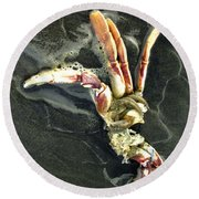 Crustacean On The Shore Round Beach Towel