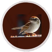 A Hungry Chipping Sparrow Round Beach Towel