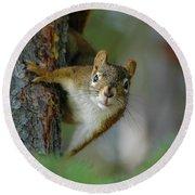 Curious Alaskan Red Squirrel Round Beach Towel