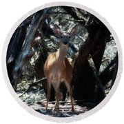 Curious Bambi Round Beach Towel