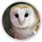 Curious Barn Owl Round Beach Towel