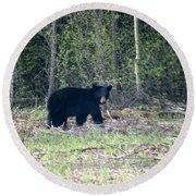 Curious Black Bear  Round Beach Towel