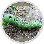 Curious Caterpillar Round Beach Towel