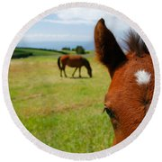Curious Colt Round Beach Towel