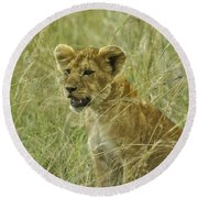 Curious Cub Round Beach Towel