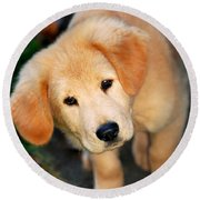 Curious Golden Retriever Pup Round Beach Towel