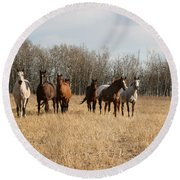 Curious Horses Round Beach Towel