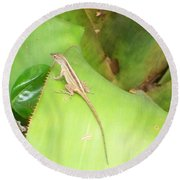 Curious Lizard I Round Beach Towel