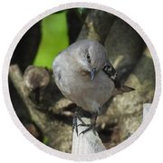Curious Mockingbird Round Beach Towel