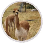 Curious Round Beach Towel