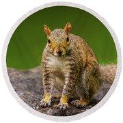Curious Squirrel Round Beach Towel