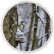 Curious White-backed Woodpecker Round Beach Towel
