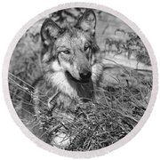 Curious Wolf Pup Round Beach Towel