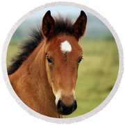 Cute Foal Round Beach Towel
