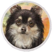 Cute Furry Brown And White Chihuahua On Orange Background Round Beach Towel