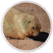 Cute Ground Squirrel Burrowing In The Dirt Round Beach Towel