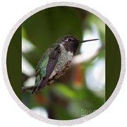 Cute Hummingbird Ready For Action Round Beach Towel