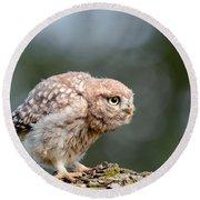 Cute Little Owlet Round Beach Towel