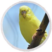 Cute Little Yellow Budgie Bird In Nature Round Beach Towel