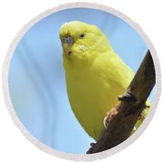 Cute Little Yellow Parakeet In The Rainforest Round Beach Towel