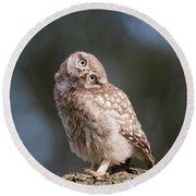 Cute, Moi? - Baby Little Owl Round Beach Towel