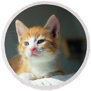 Cute Orange Kitten With Large Paws In Sunny Day Round Beach Towel