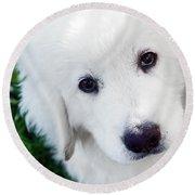 Cute White Puppy Dog Portrait. Polish Tatra Sheepdog Round Beach Towel
