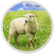 Cute Young Sheep Round Beach Towel