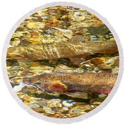 Cutthroat Trout In Clear Mountain Stream Round Beach Towel