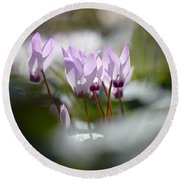 Cyclamen At Lachish 1 Round Beach Towel