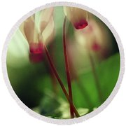 Cyclamens Round Beach Towel