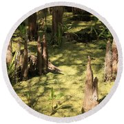 Cypress Knees In Green Swamp Round Beach Towel