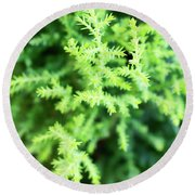 Cypress Leaves Close Up Round Beach Towel